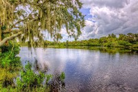Manatee River-