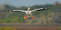 On Final Approach-
